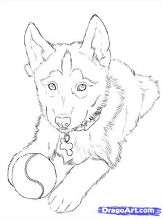 how to draw huskies draw a husky step 24 puppy drawing easy husky drawing