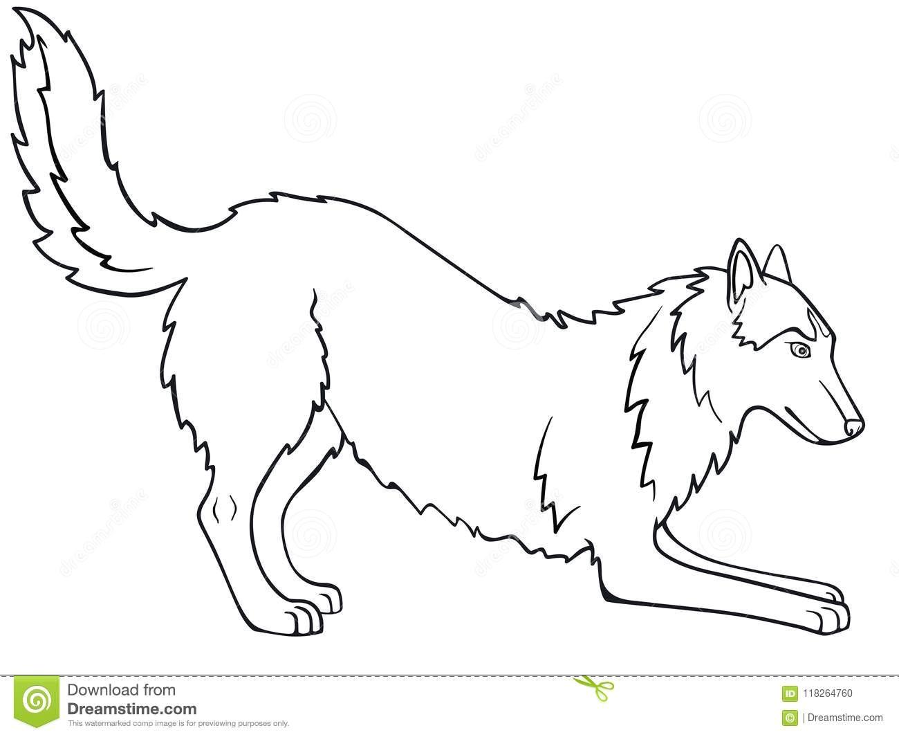 Easy Drawings Husky Siberian Husky Alaskan Malamute the Dog is Playing Line Drawing