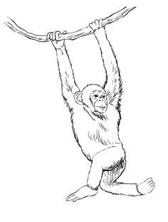 sketchbook challenge 45 how to draw a monkey