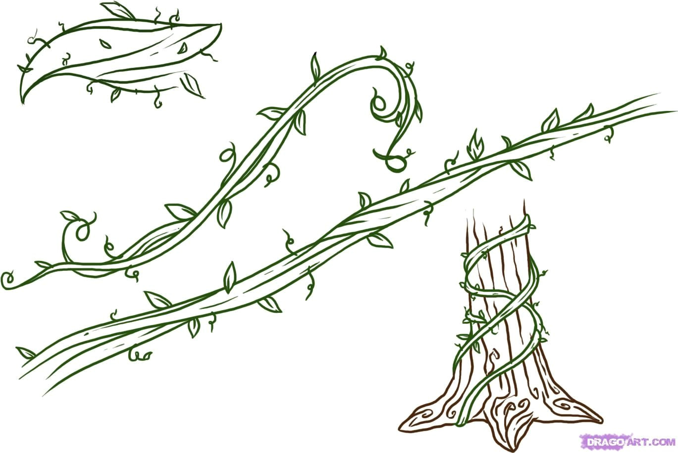 drawings of flowers leaves and vines to draw vines step by step trees pop culture free online drawing