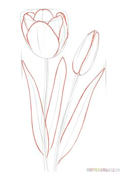 how to draw a tulip step by step drawing tutorials for kids and beginners