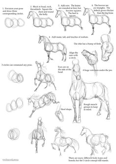 how to draw animals horse more horse