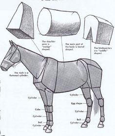 here s a helpful analysis of the main forms in a horse s body the basic shapes