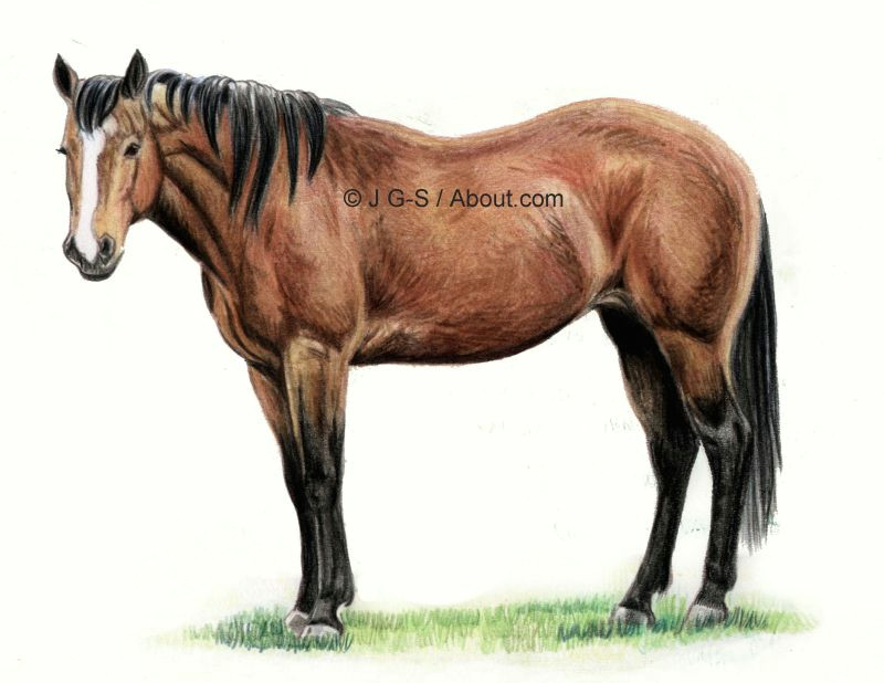 finishing the horse drawing