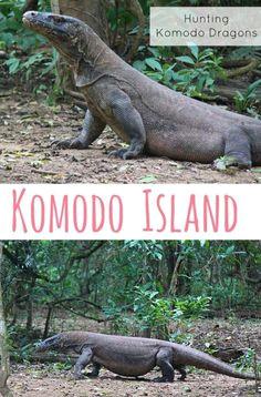 hunting komodo dragons on komodo island the traveloguer travel blog komodo national park