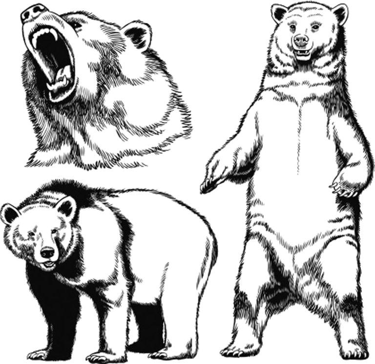 grizzlybear 56f4b2e75f9b582986634b40 jpg