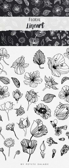over 50 hand drawn floral elements in png eps format draw flowers drawings