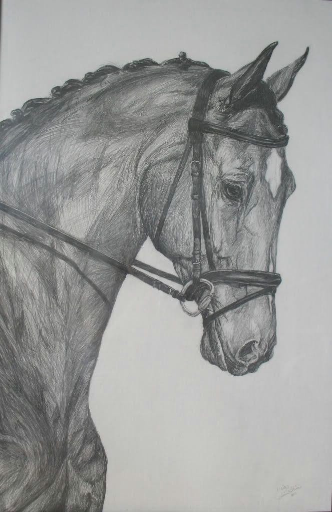 pencil drawings pencil drawing learn drawing horses