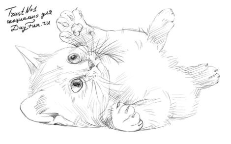 d d do d d n d n d d d n n dod n n d dod dod n d d d d n d d d d n n d d d d 5 cat drawing tutorial animal sketches animal drawings