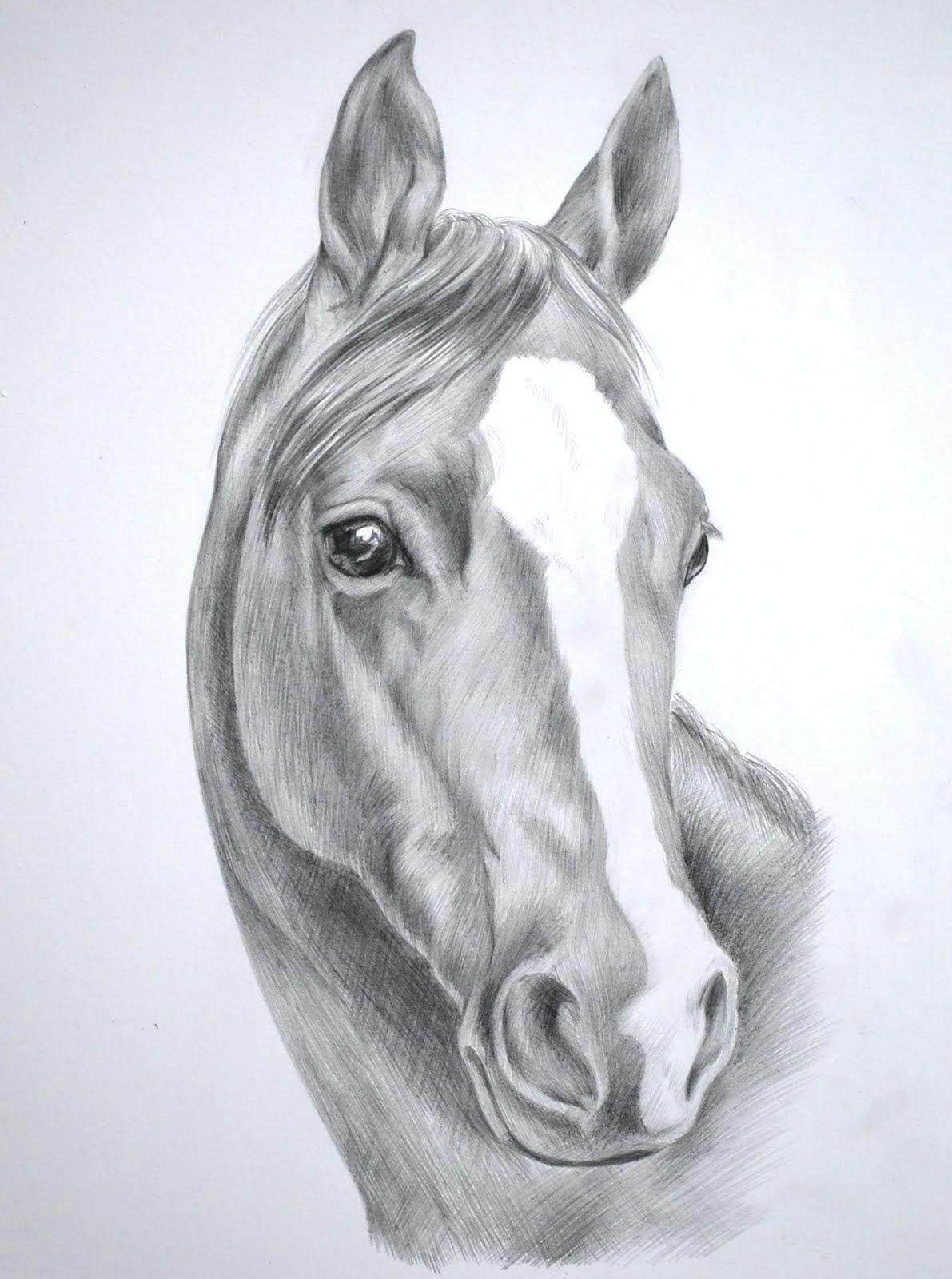 horse pencil sketches wednesday november 25 2009