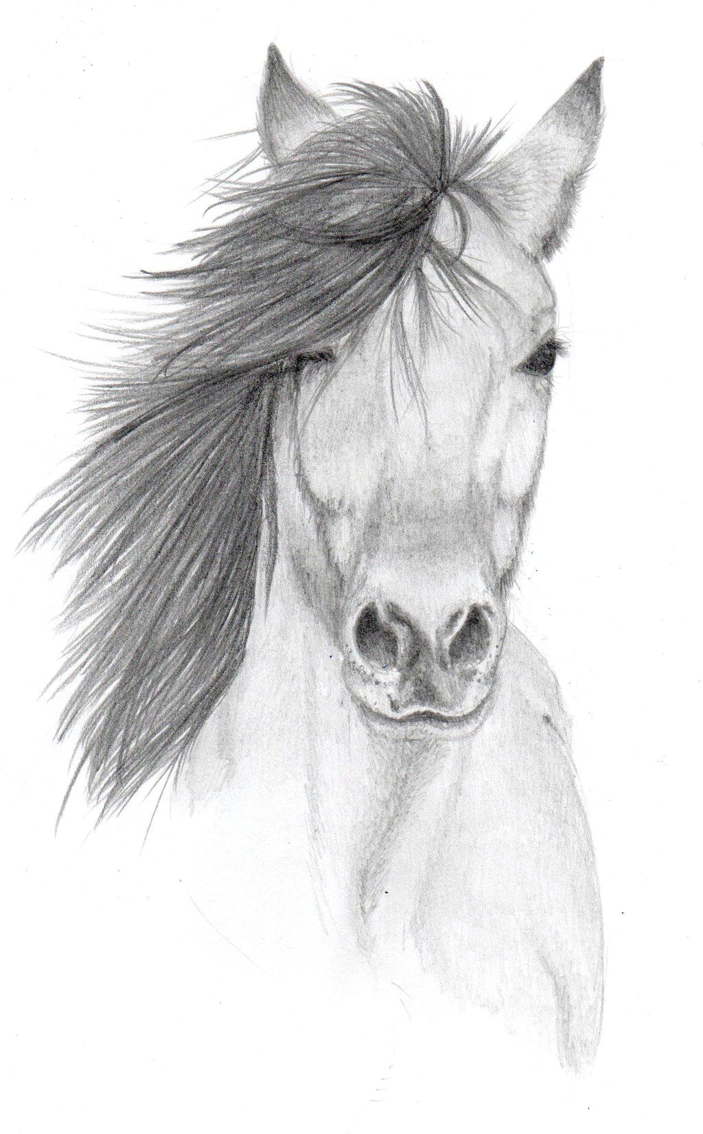 pencil sketches of animals horse pencil sketch by vulpes corsac traditional art drawings animals