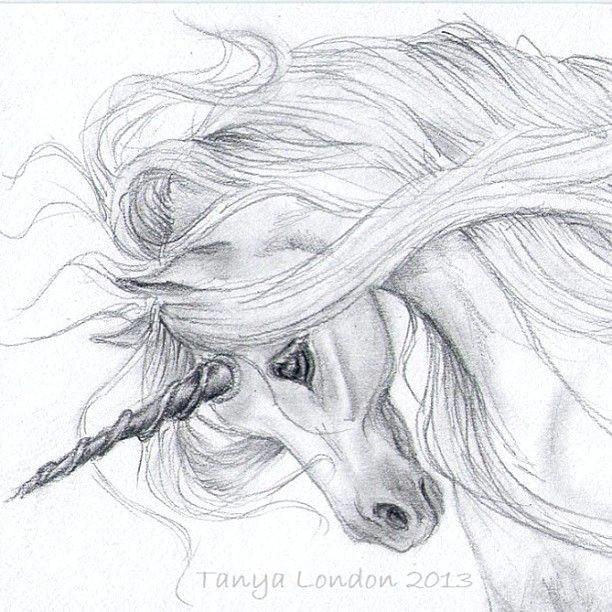 realistic unicorn drawings unicorn drawing in pencil gray unicorn whispwan graphite