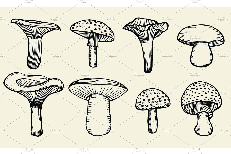 hand drawn vintage mushrooms by vector videoartshop on creativemarket