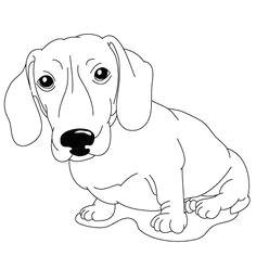 various dog breed how to draw lessons dachshund drawing dachshund art daschund