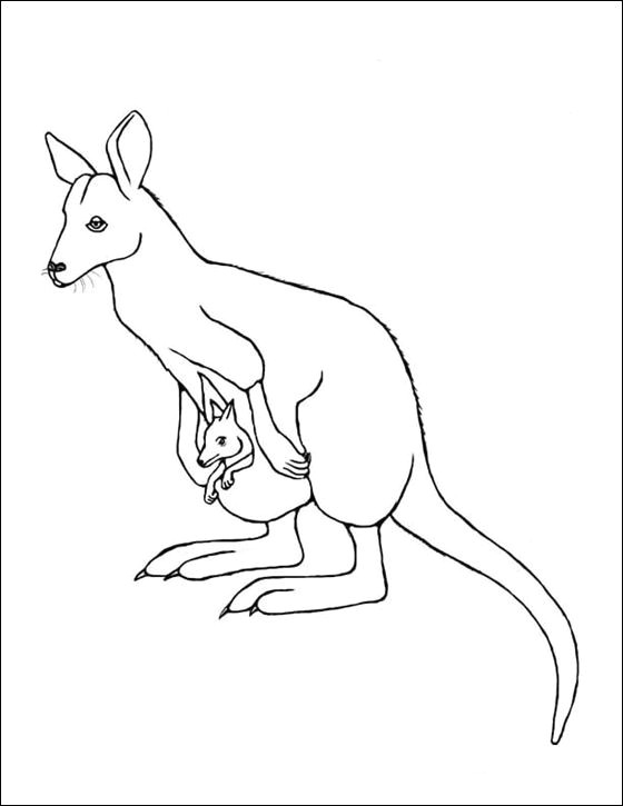 wallaby google search zoo activities kangaroos line drawing coloring pages literacy