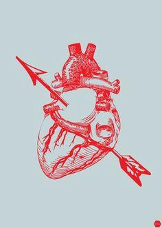 heart gravure illustration heart illustration anatomy art human anatomy heart images