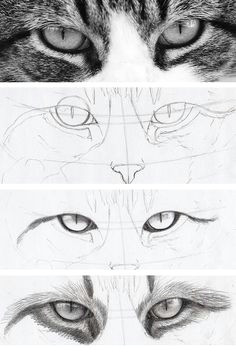 do you think cat eyes are harder to draw than human eyes drawing them basically
