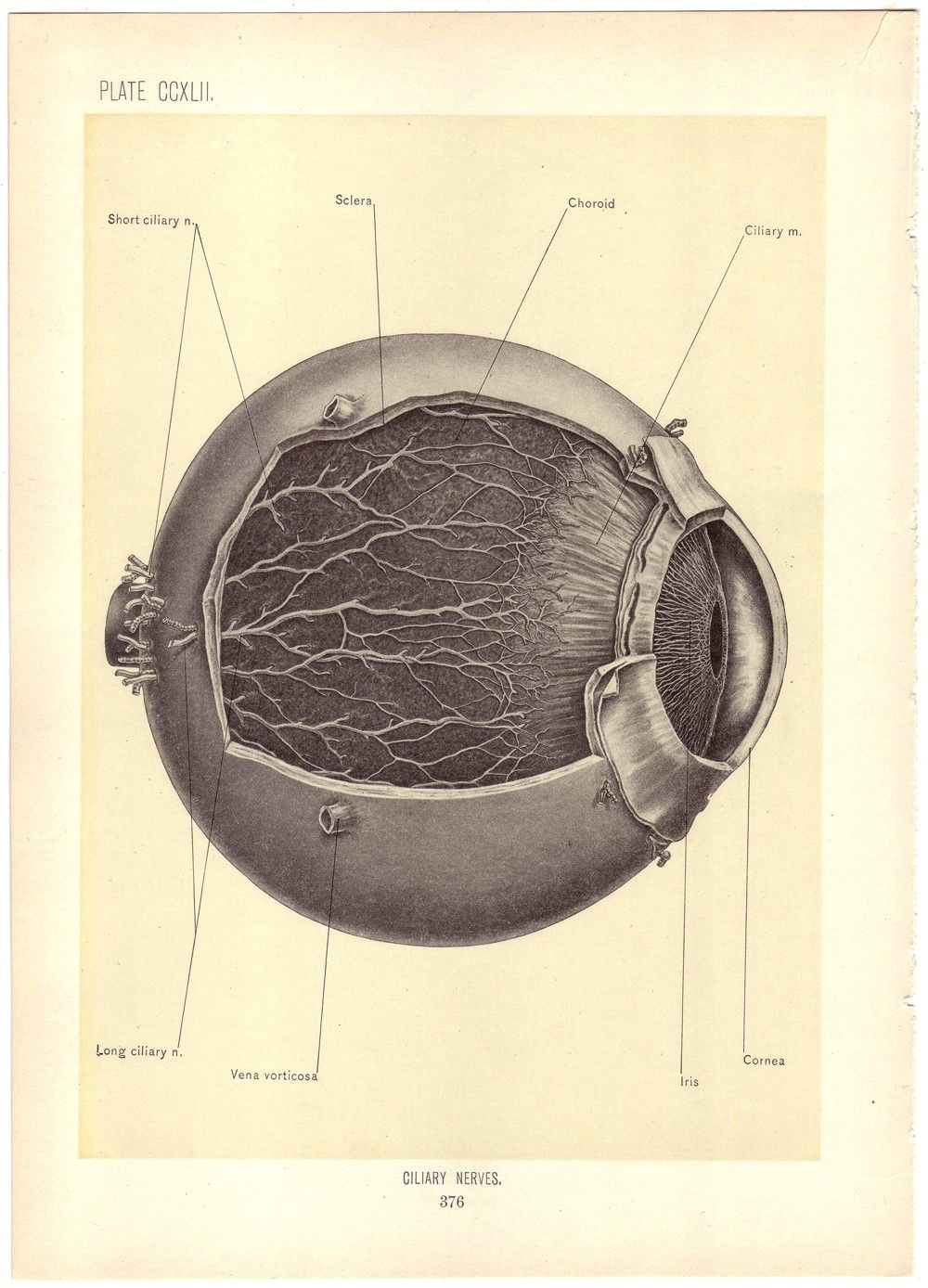 medical art medical drawings medical history vintage medical