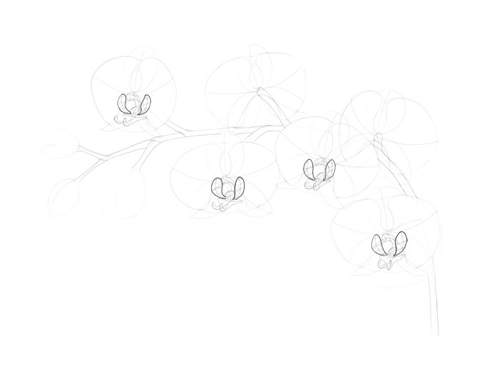 how to draw an orchid step by step line work