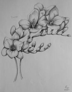 freesia flower drawing august 19 2013 skici tetovana tetovana po cele paa i