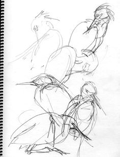 snowy egret gesture drawings bird drawings animal drawings drawing sketches pencil drawings