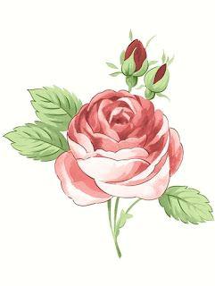 bellas ilustraciones hand drawings beautiful roses vintage flowers pink roses flower art