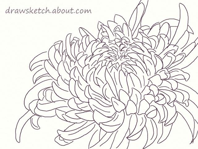 chrysanthemum design drawing