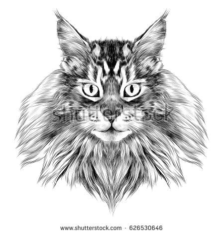 cat breed maine coon face sketch vector black and white drawing