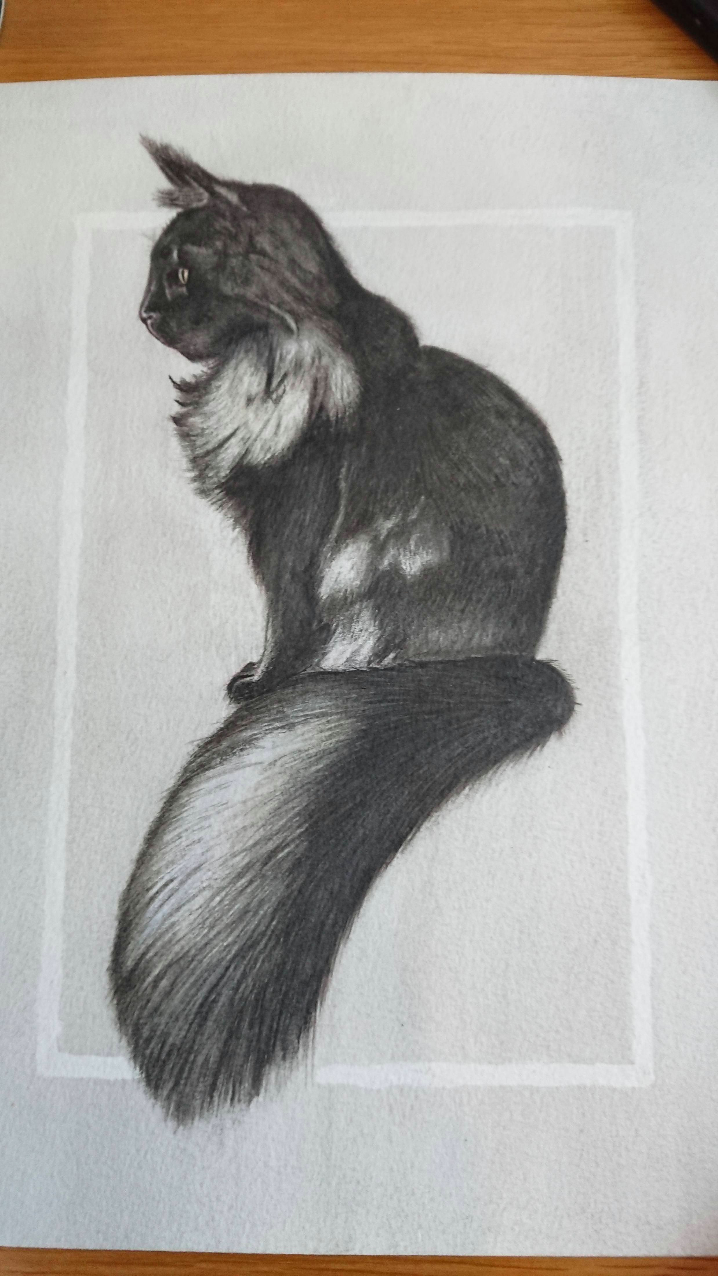 cat pencils watercolour and indian ink a4