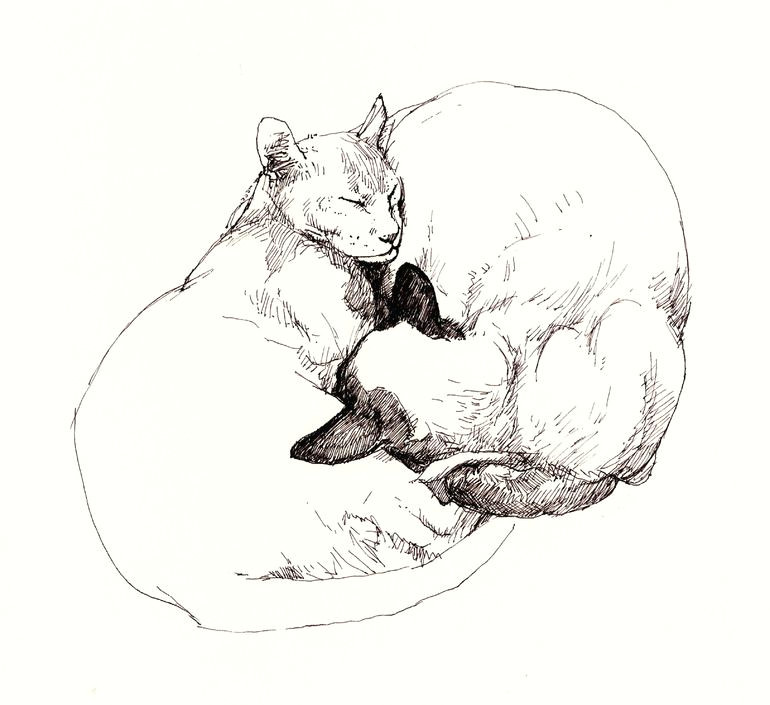 saatchi online artist roz mcquillan pen and ink drawing chinky and chang yin and yang