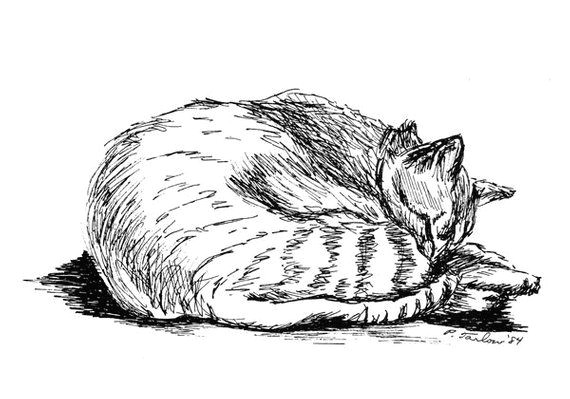 tabby cat drawing cat pen and ink tabby cat print tabby cat pen ink illustration tabby cat pen