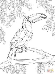 toco toucan coloring page supercoloring com free printable coloring pages coloring book pages
