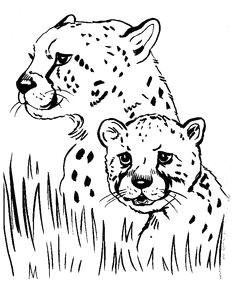 Jungle Drawing Ideas 372 Best Jungle Ideas Images Jungles Animal Stencil Crafts for Kids
