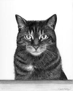 kitten pencil drawing tabby cat graphite on claybord 2014 kitten drawing