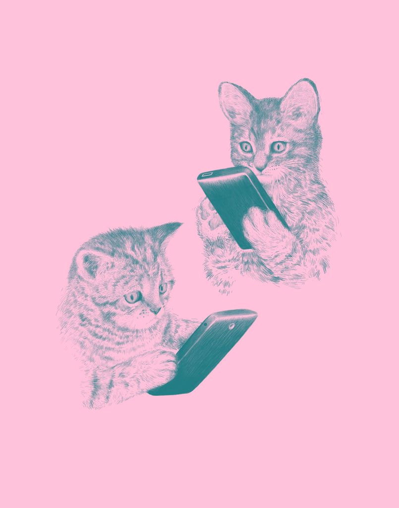 kittens texting by laser bread via cat