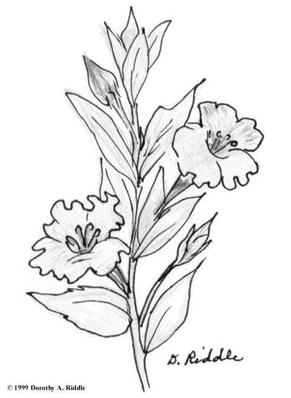 gallery of line drawings flowers fresh drawings flowers s s media cache ak0 pinimg originals 0d 1d