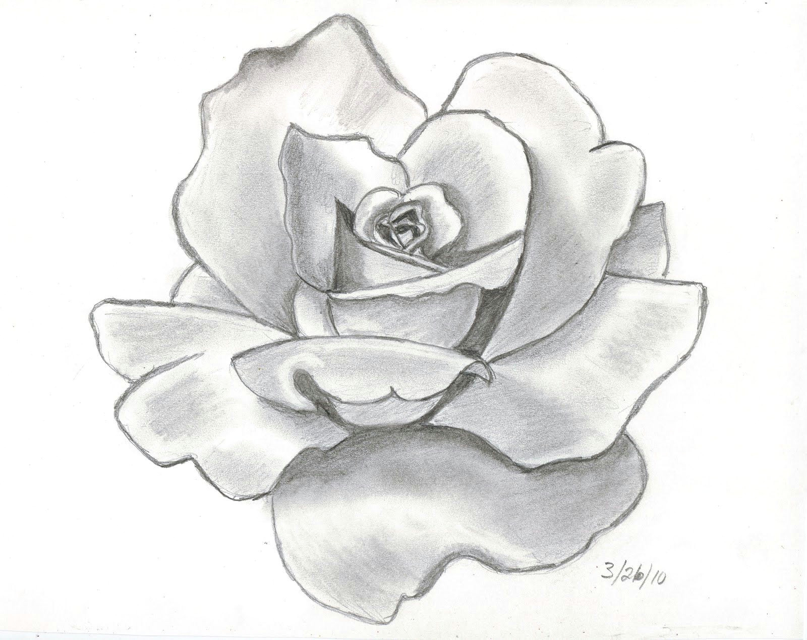 61 best art pencil drawings of flowers images pencil drawings pencil drawings of flowers pencil art
