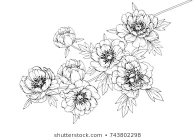 flowers drawing with line art on white backgrounds