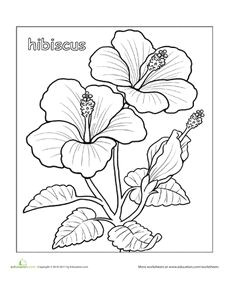 Line Drawing Of Hibiscus Flowers 11 Best Hibiscus Drawing Images In 2019 Hibiscus Drawing Hibiscus