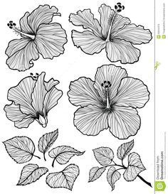 hibiscus flower graphic head set with leaves and branch with leaves isolated on white background