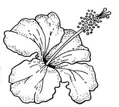 hibiscus flower puerto rico hibiscus flower drawing hibiscus flowers floral drawing watercolor