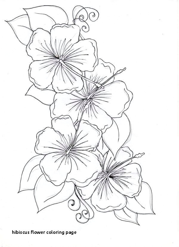 hibiscus coloring page fresh hibiscus flower coloring page of hibiscus coloring page fresh hibiscus flower coloring
