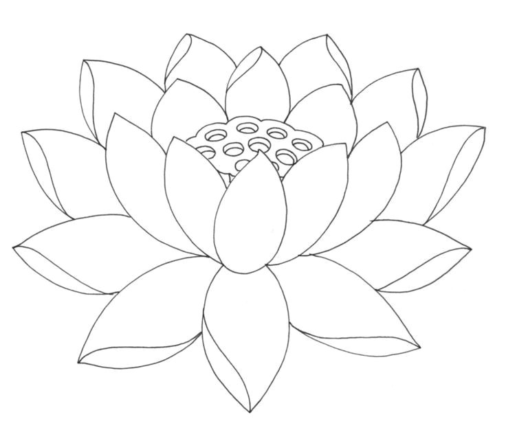 image result for lotus line drawing