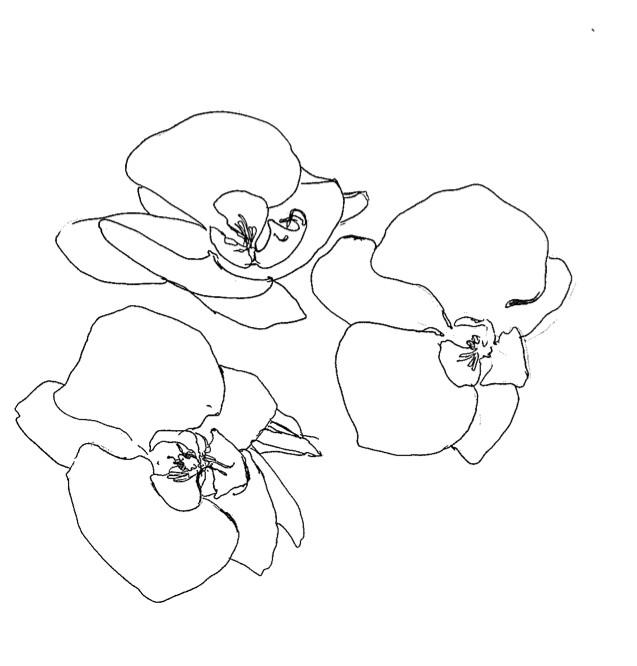 brookes delirium outklasse i love line drawings