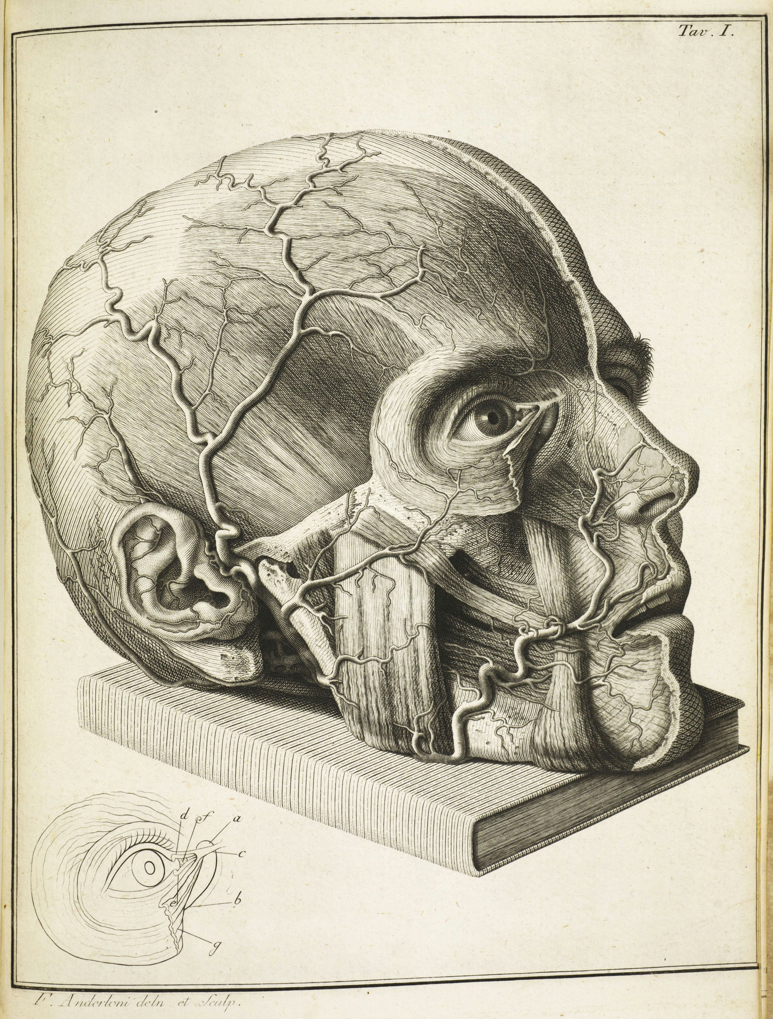 16th century drawings of disease are as fascinating as they are disturbing morbid anatomy pinterest anatomy exhibitions and drawings