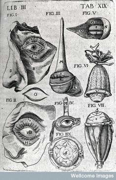 eye 1605 from theatrum anatomicum vintage medical medical drawings medical illustrations figure