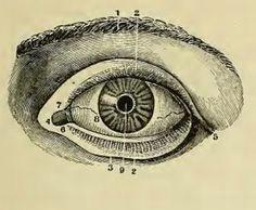 from henry h smith anatomical atlas eye anatomy