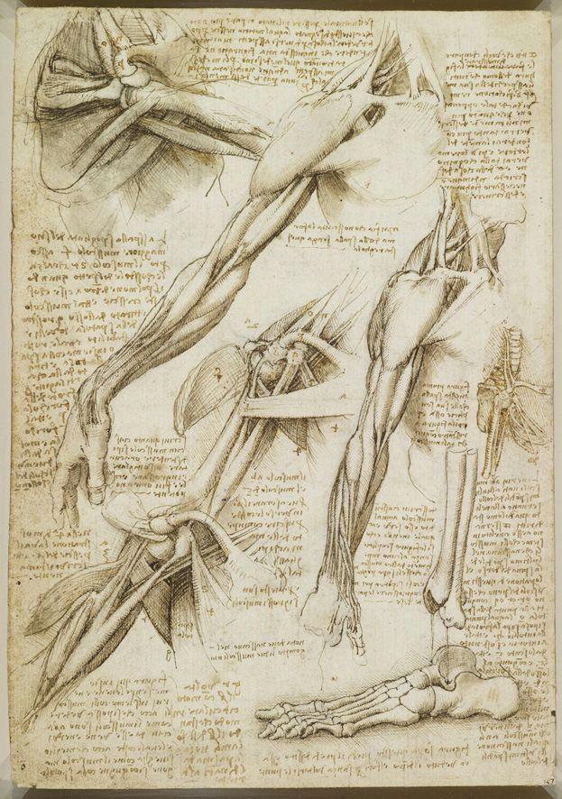 a rare glimpse of leonardo da vinci s anatomical drawings maria popova 2012 brain pickings book review article images video link of leonardo da
