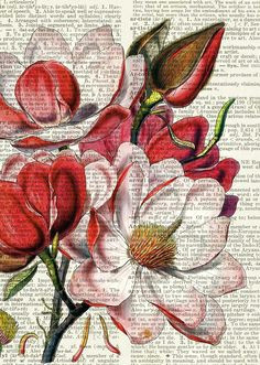 magnolia dictionary page print flower art drawingflower