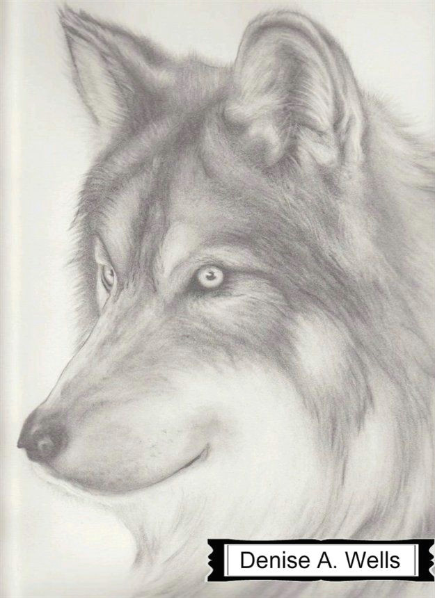 paper wolf drawing by denise a wells